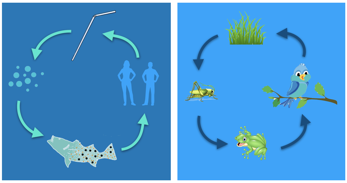 Ecosystem images, straws break the system and get in the fish which in turn if we eat the fish we will be consuming plastic.